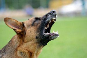 Nach einem Hundebiss kann Schmerzensgeld eingefordert werden.