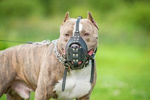 Ein Hundebiss verursacht Schmerzensgeld, weil von Hunden eine allgemeine Gefahr ausgeht.