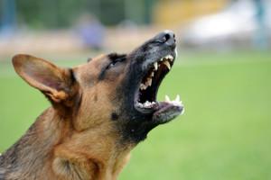 Auch ein Hundebiss kann ein Schmerzensgeld in Österreich begründen.